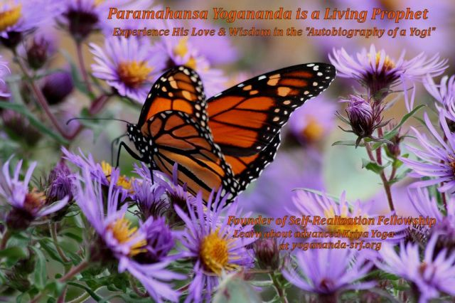 PY  quote and Monarch Butterfly 1 2015